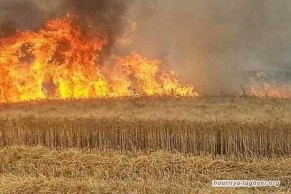 نائب عراقي يتهم السعودية والإمارات بحرق المحاصيل