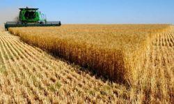 الصادرات الزراعية الروسية إلى السعودية تتضاعف بنحو 2.4 مرة