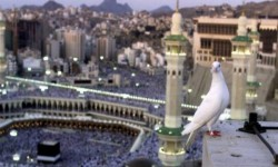 """ناشطون على """"تويتر"""": آل سعود يملؤون جيوبهم من أموال المسلمين"""