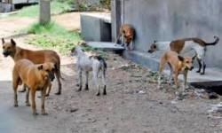 لماذا أثنى أعضاء بمجلس الشورى على «الكلاب»؟
