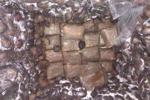 ضابط في مكافحة المخدرات يكشف عن دور وزارة الداخلية في تهريب وترويج المواد المخدرة